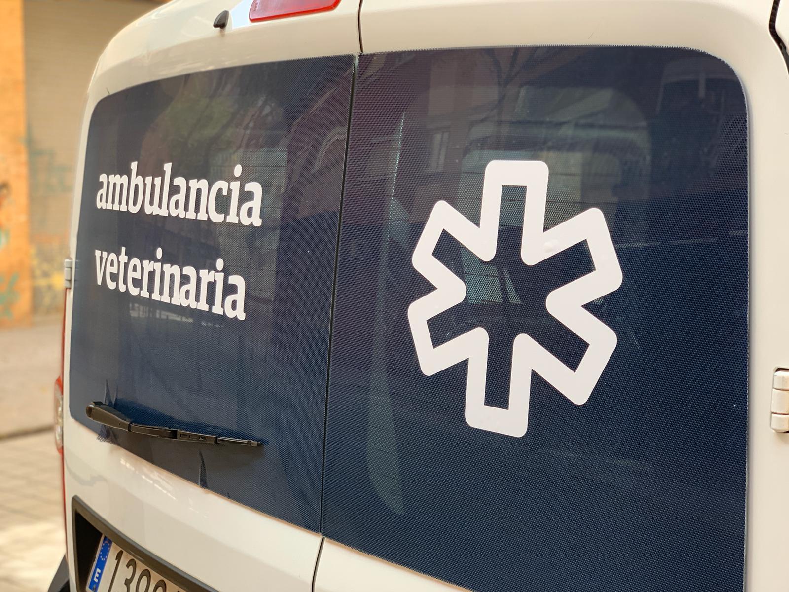 Ambulancia veterinaria en albacete