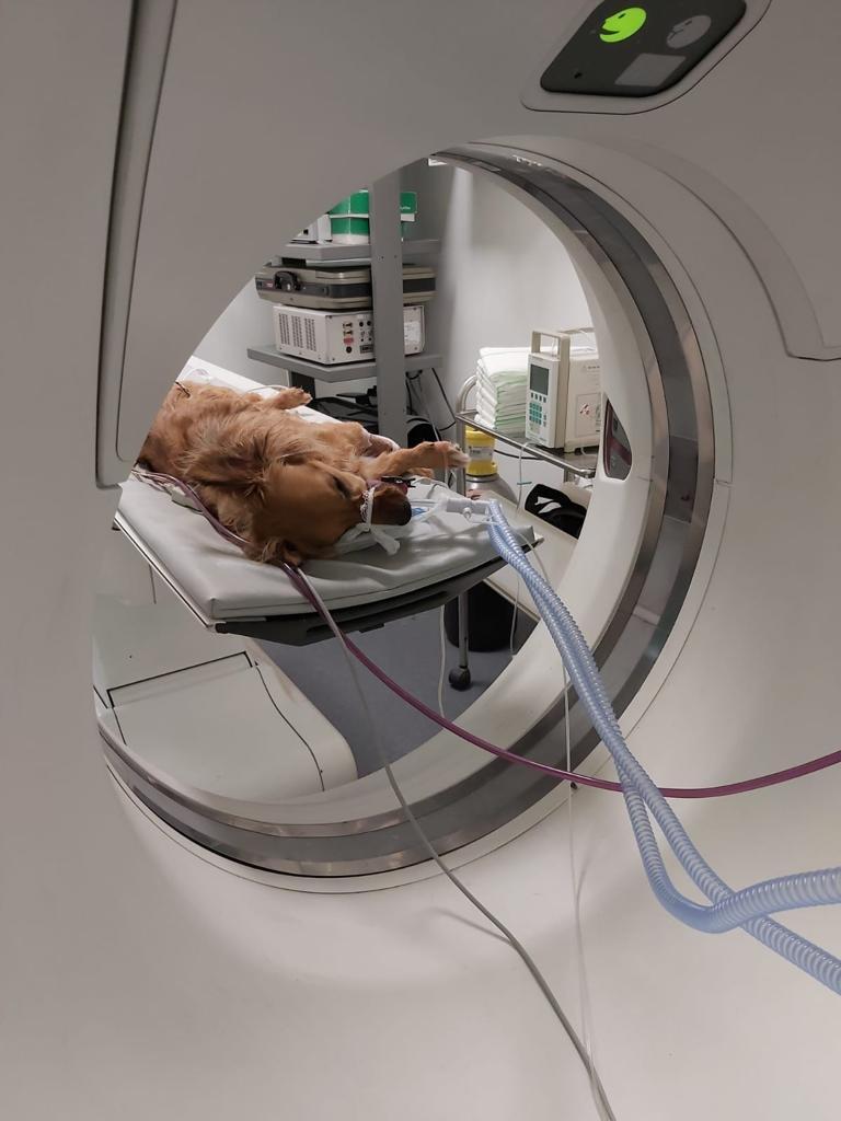 Tac tomografía axial computerizada perro
