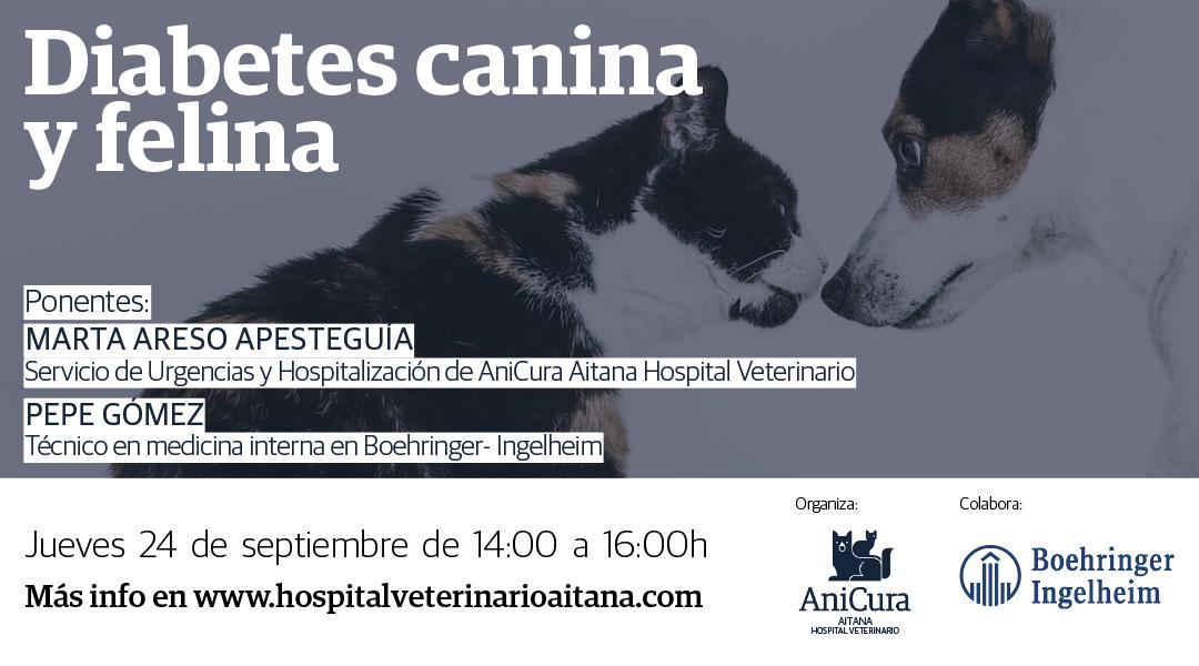 Webinar: Diabetes canina y felina