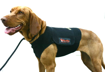 chaleco holter perro